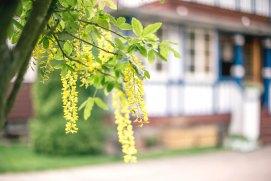 garden-vila-misko-namas-5635.jpg