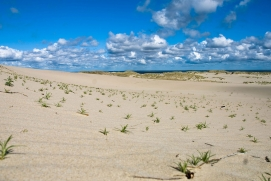 sand-dunes-nida-lithuania-miskonamas.jpg